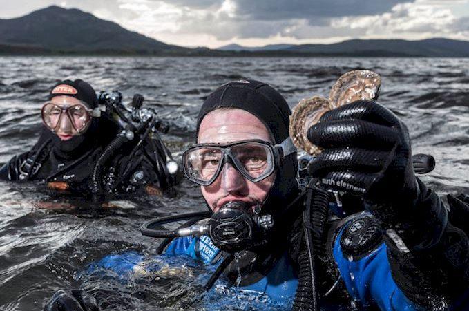 Dornoch Firth Sees Wild Oysters Return